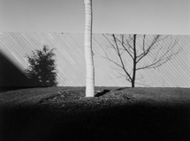 Fences-and-walls-04