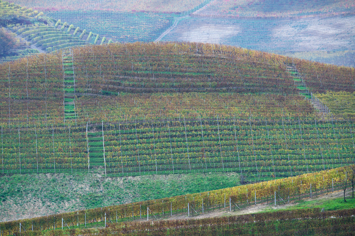 Vineyards 10