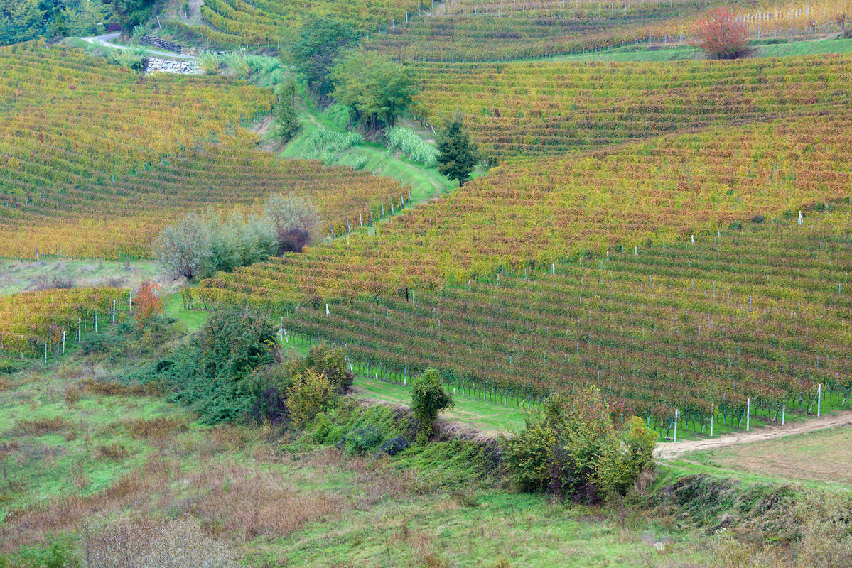 Vineyards 20
