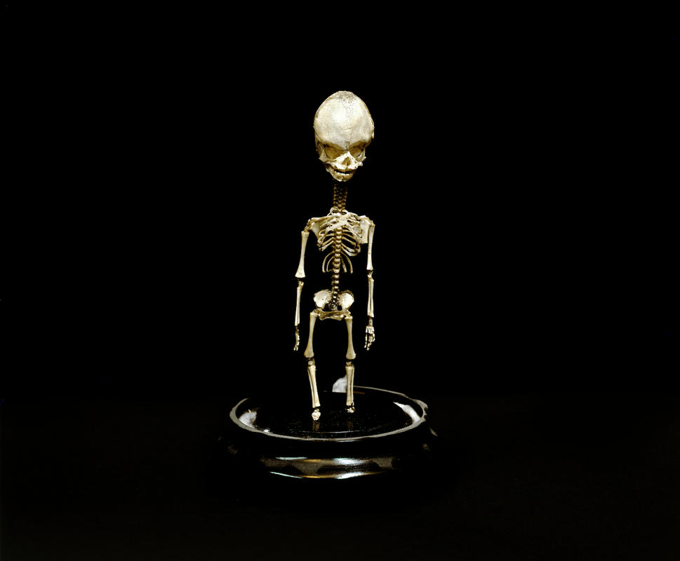 Little skeleton rtp